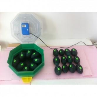 Incubator Cleo manual pentru EMU (8 - 10) oua